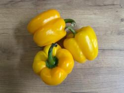 Paprika Žuta